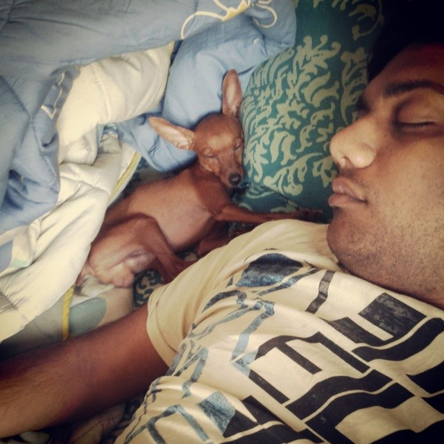 Milo Mornings. I hate it when I get clicked when I am sleeping. But this is way too adorable. #minpin #pet #mornings #adorable #cute #cosy